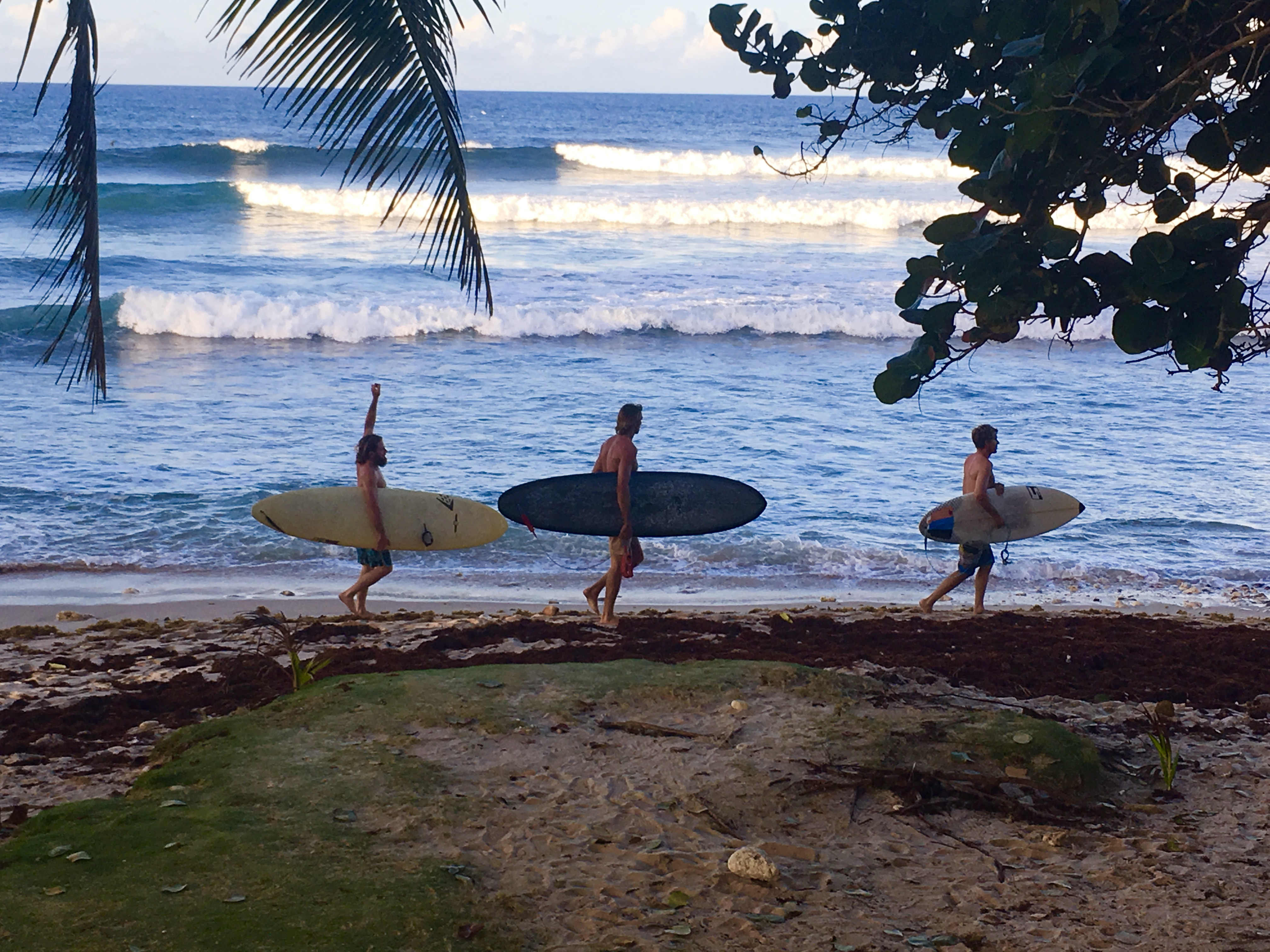 three surfers with their surf boards at bathsheba beach barbados