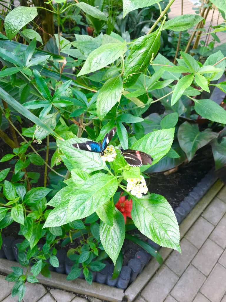 live butterflies at the butterfly farm in Steinhude