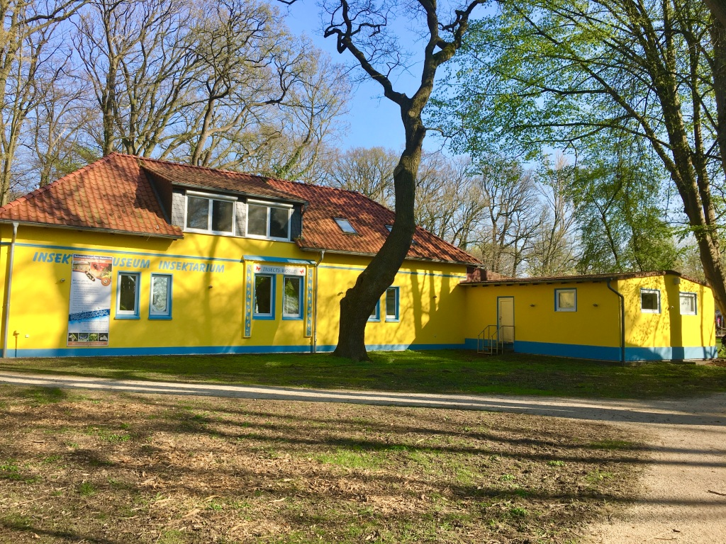 yellow insect museum building