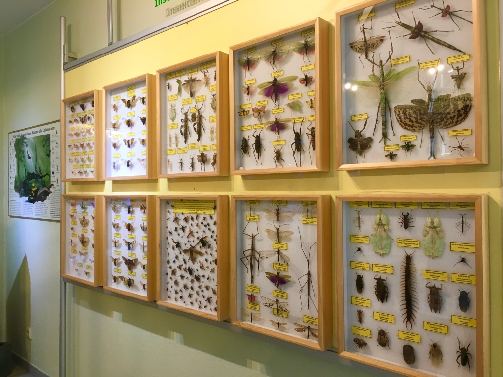 preserved insects at the insect museum in Steinhude Germany