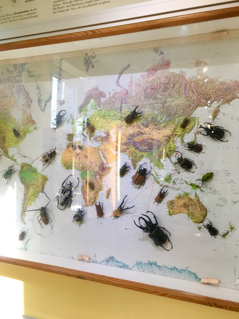 Insects at the insect museum in Steinhude Germany